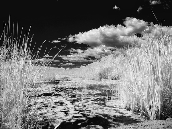 IR photo sedona wetlands