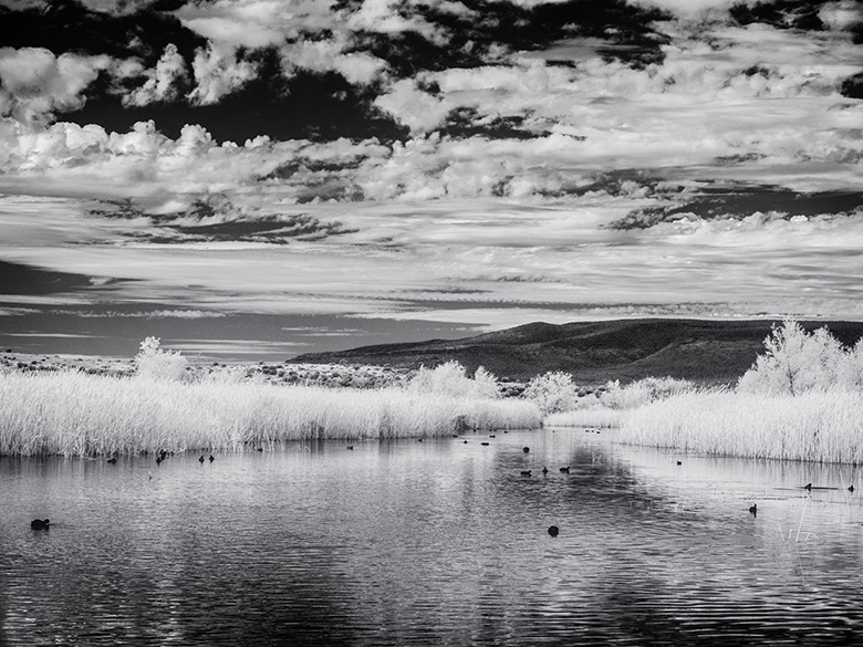 sedona wetlands infrared photo