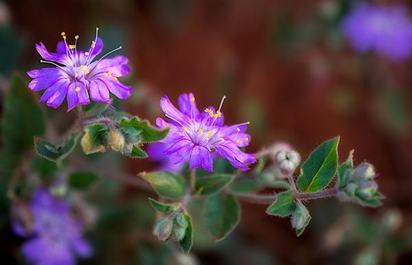 sunlit flowers photo