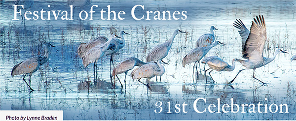 festival of the cranes banner photo by Lynne Braden