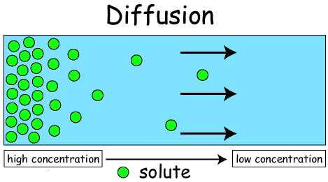 Is Your Life One Of Passive Diffusion Or Active Transport Successify