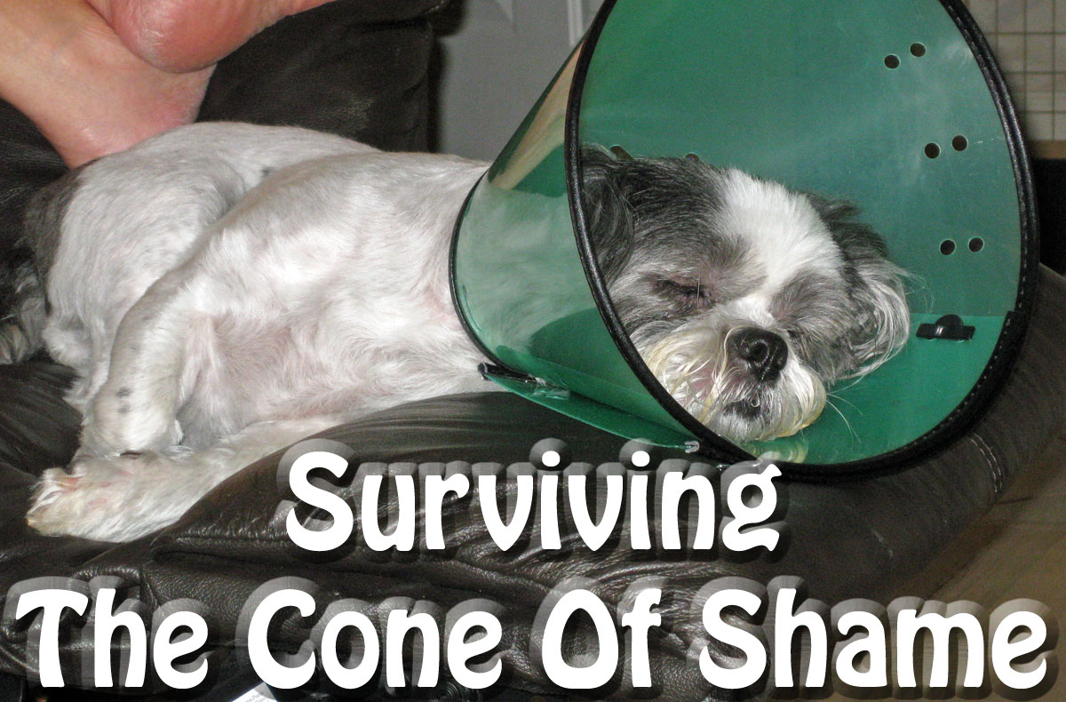 surviving the cone of shame success just clicks