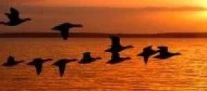 birds-flight[1]