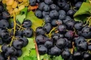 grapes-4621684_640