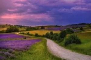 lavender-4673090_640