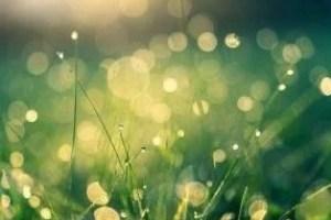 meadow-4485609_640