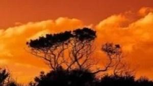 trees-2920264_640