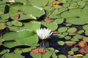 white-flower-4673901_640