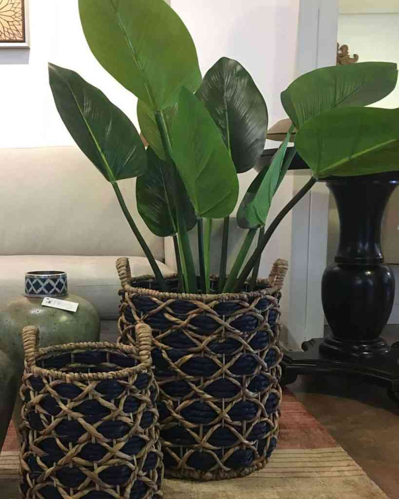 Cómo cultivar y mantener las heliconias en tiestos
