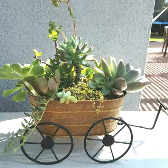 Carretillas con flores para adornar