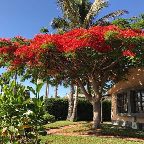 Flamboyan Cultivo Cuidados Y Propagacion Succulent Avenue