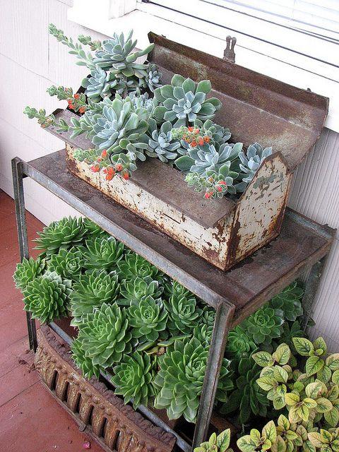 Cómo cultivar y cuidar la echeveria en macetas