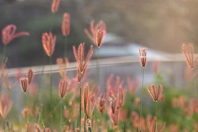 No dejes florecer las malas hierbas