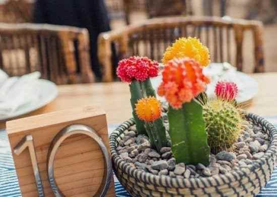 Bodas decoradas con cactus