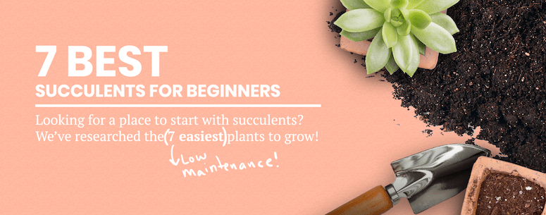 7 Best Succulents for Beginners