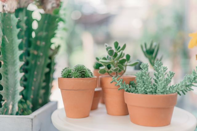 When you should water your succulents