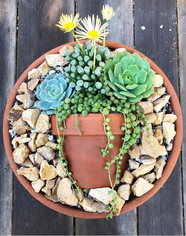 Succulent pot trend