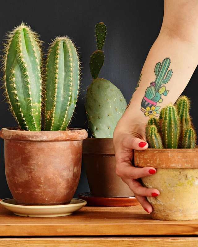 What does it mean when someone gives you a cactus