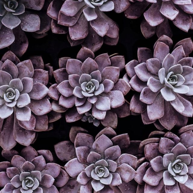 Succulent plants are so popular but why