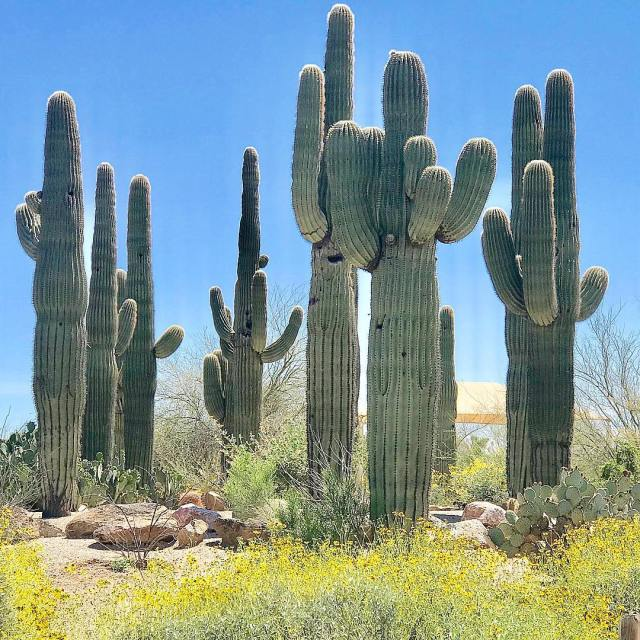 9 Types of Cacti