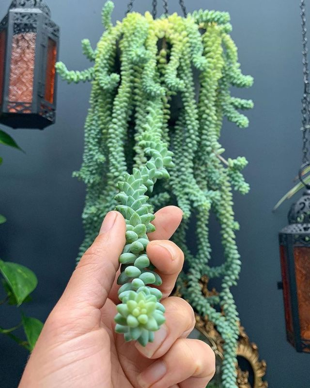 Best Succulents for Low Light Environments