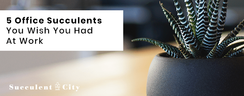 5 Office Succulents You Wish You Had for Work