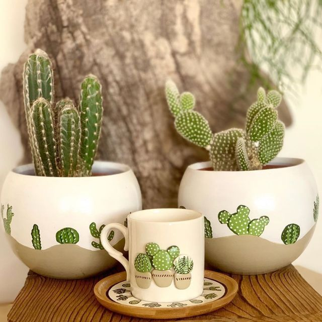 What is a Cactus?