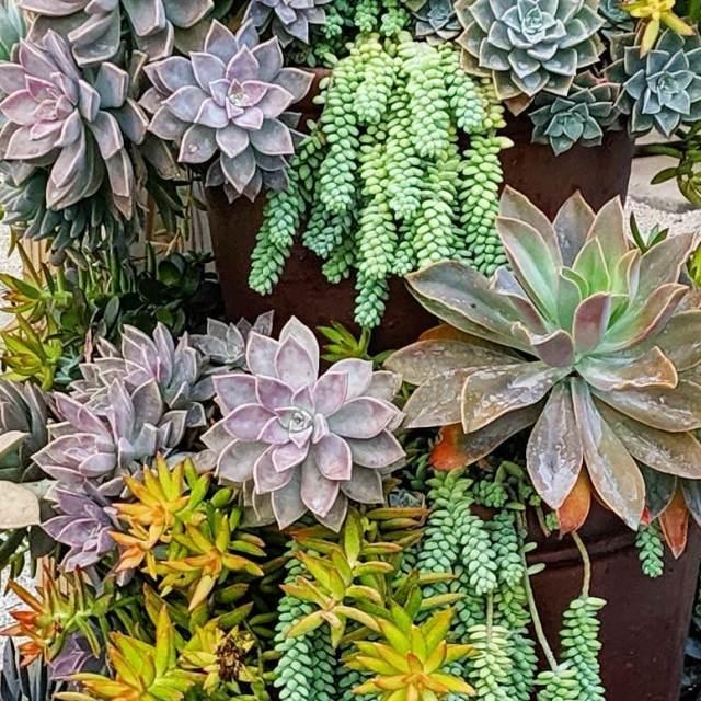 7 Succulents for Wedding Arrangements