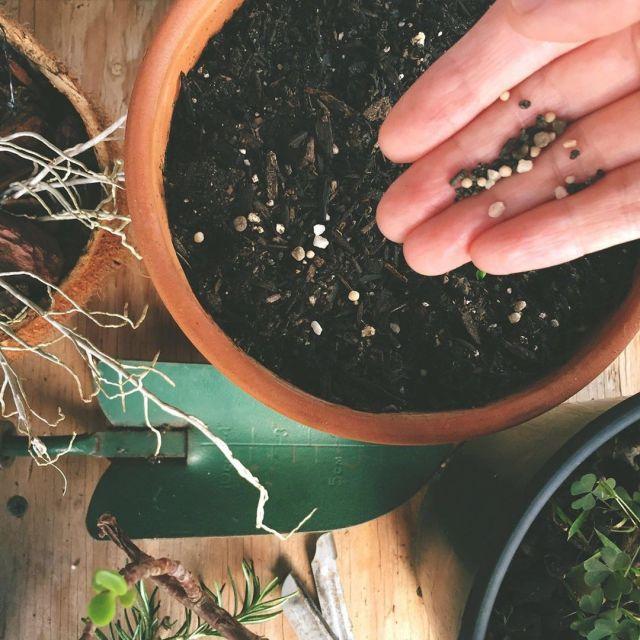 5 Safest Fertilizers For Your Succulents