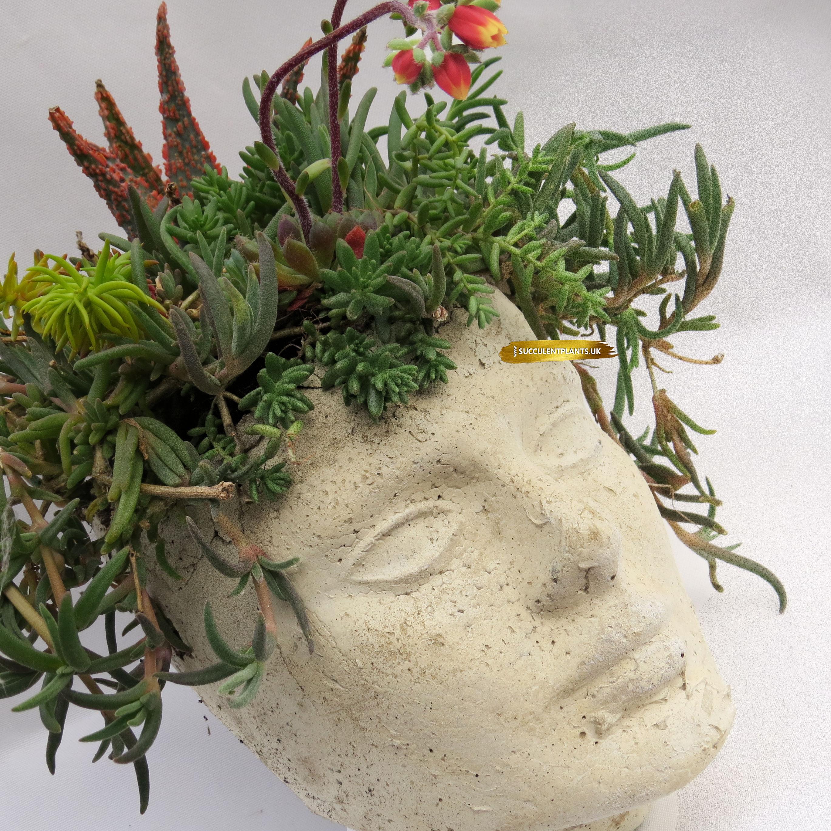 Large Concrete Head Planter