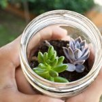 How To Plant Succulents In Glass Containers Succulents Grower