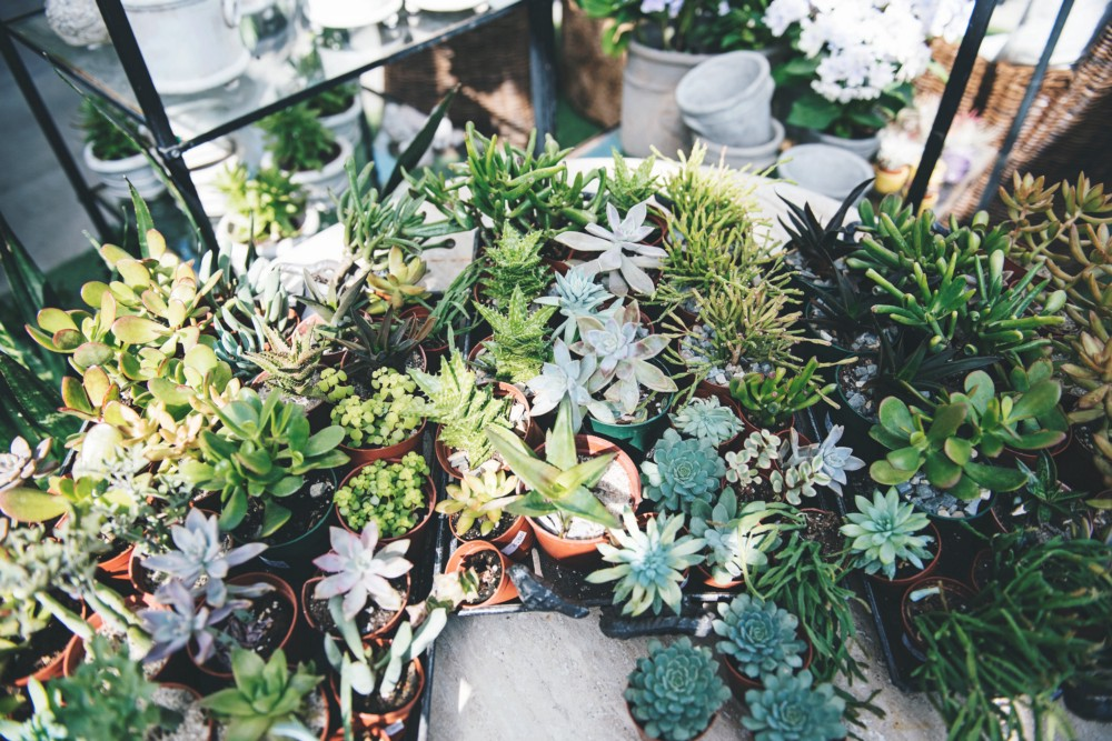 5 Simple Tricks to Giving Your Succulents Their Best Life