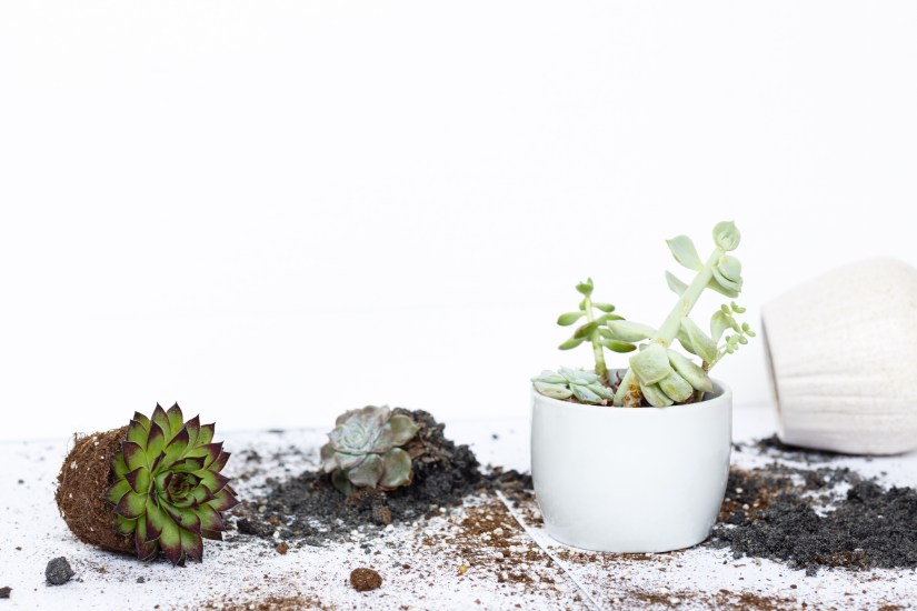succulent-plants-in-flower-pot-and-earth-lying-on-white-background_t20_zv9xzn-1