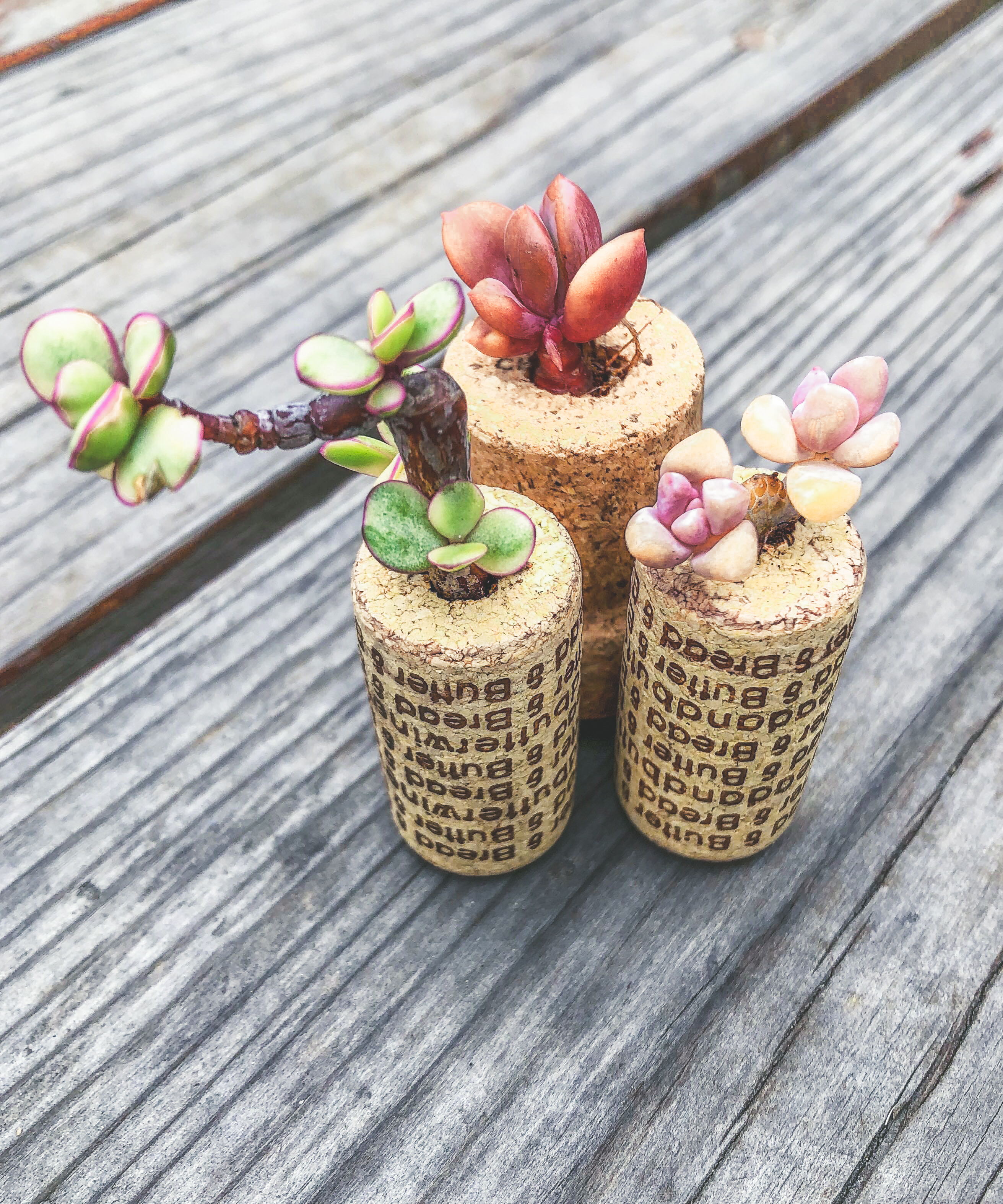 Wine Cork Succulent Planter DIY