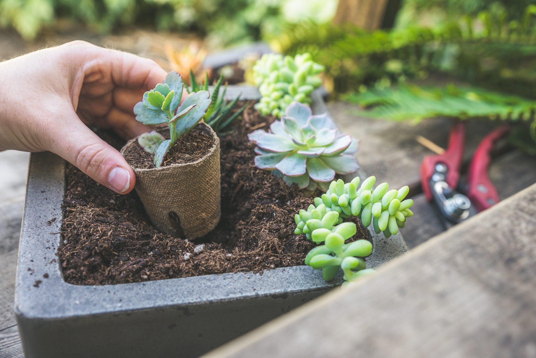 Movin' Out: How to Take Indoor Succulents Outdoors for Summer