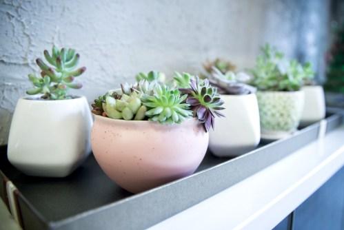 succulent-plants_t20_WQ1xAV