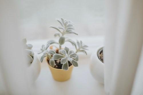 succulents-moody-tones_t20_2wNBjZ