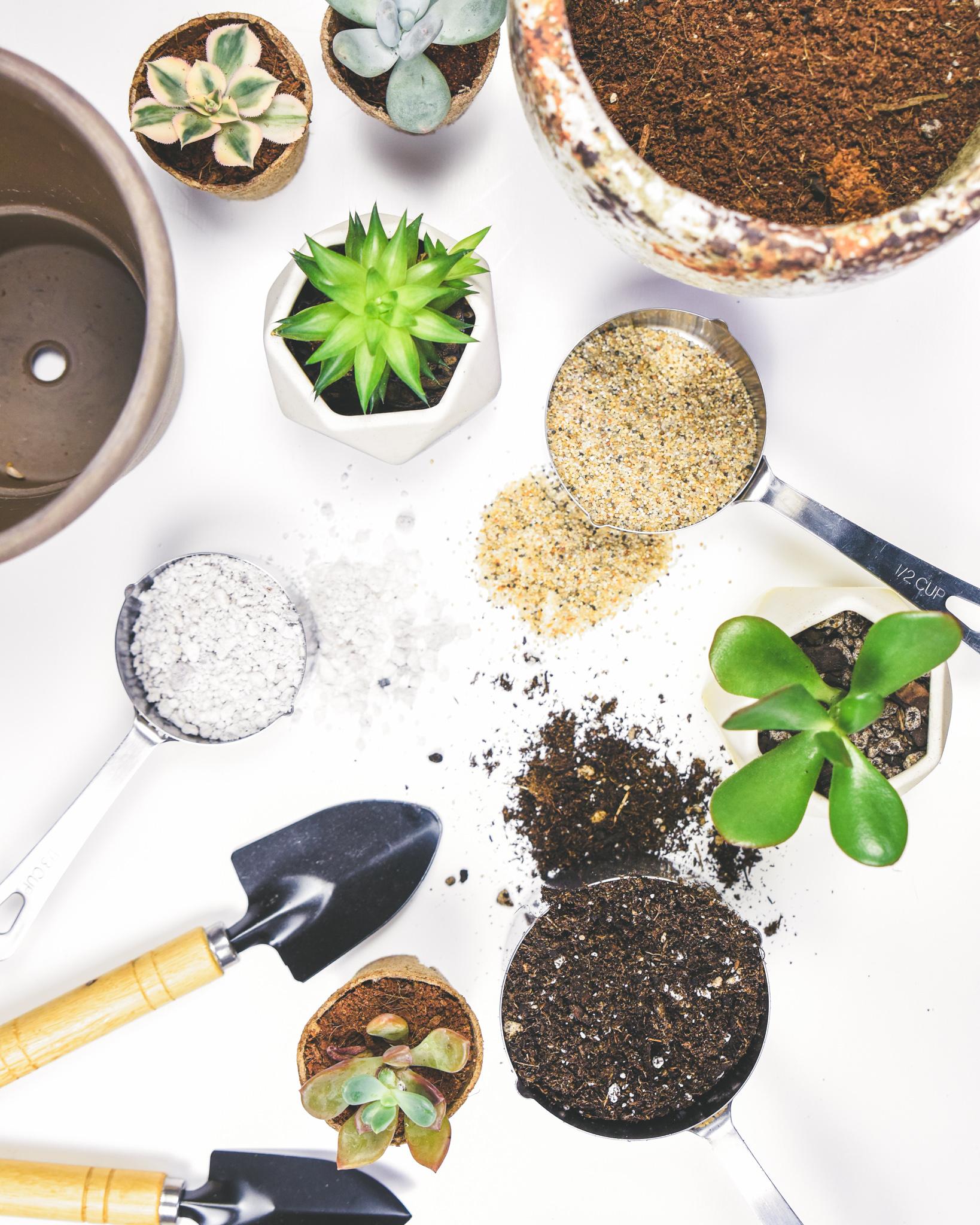 3 Ingredient Cactus Soil DIY