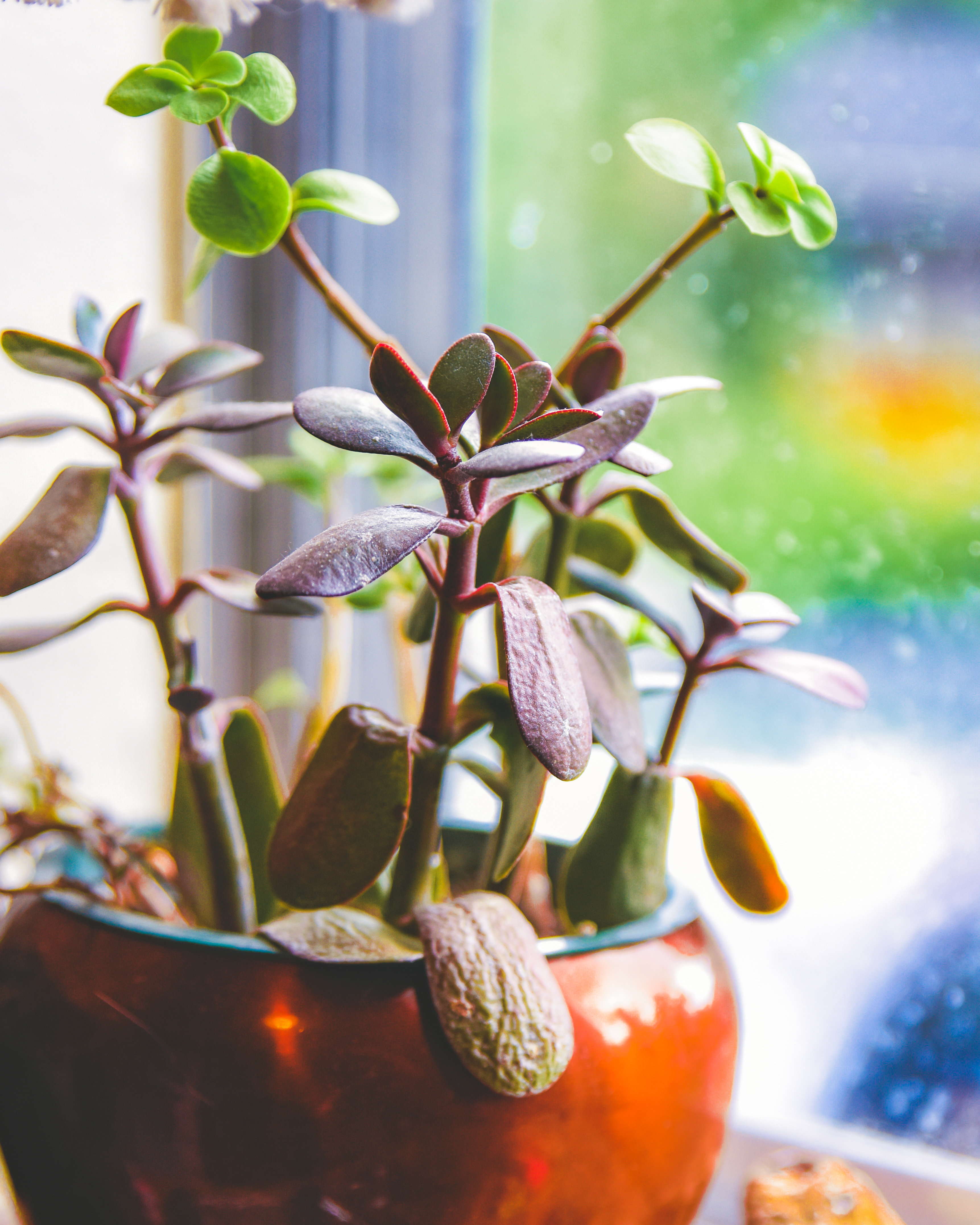 How to Spot and Save Under-watered Succulents