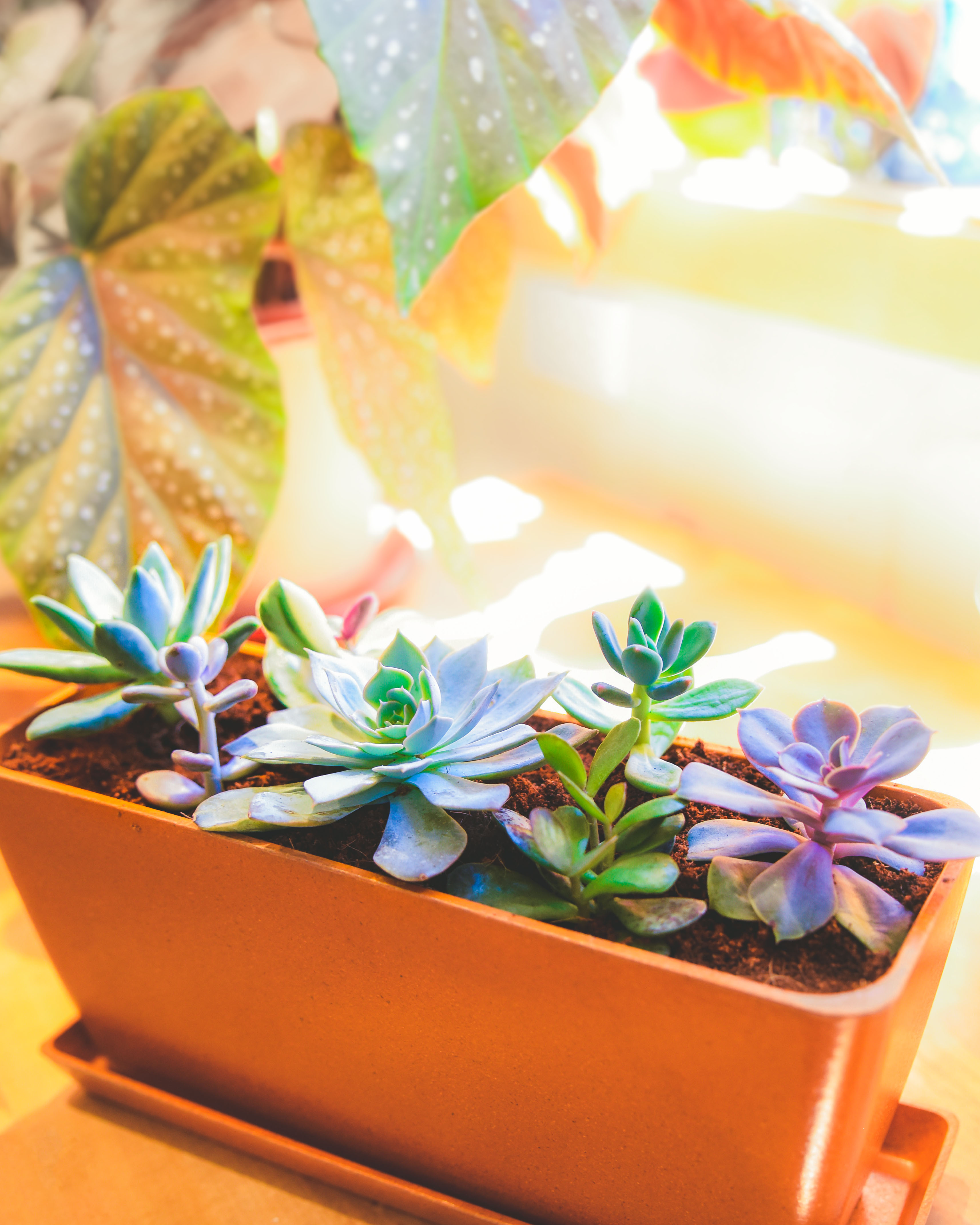 How-To: Choose Succulents to Plant Together