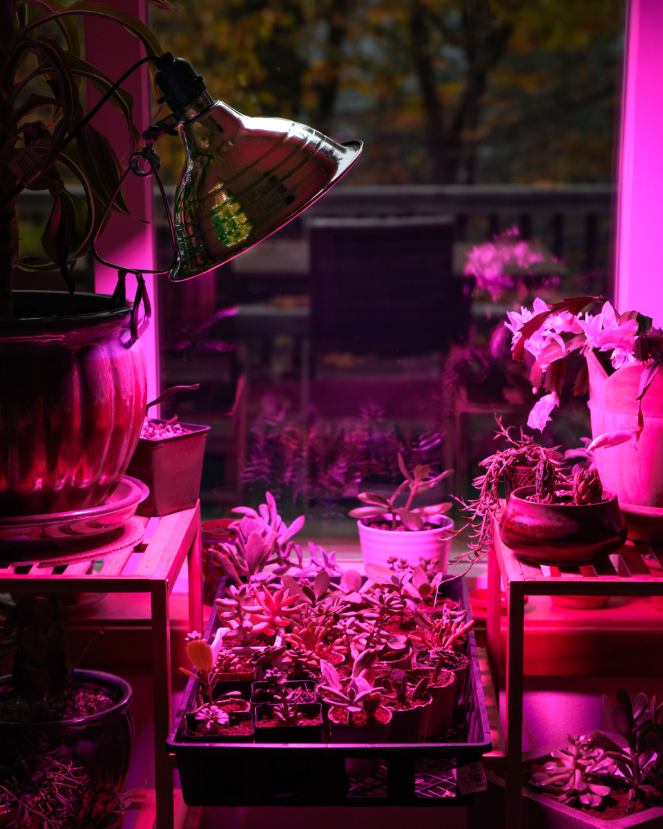 Grow Light FAQs