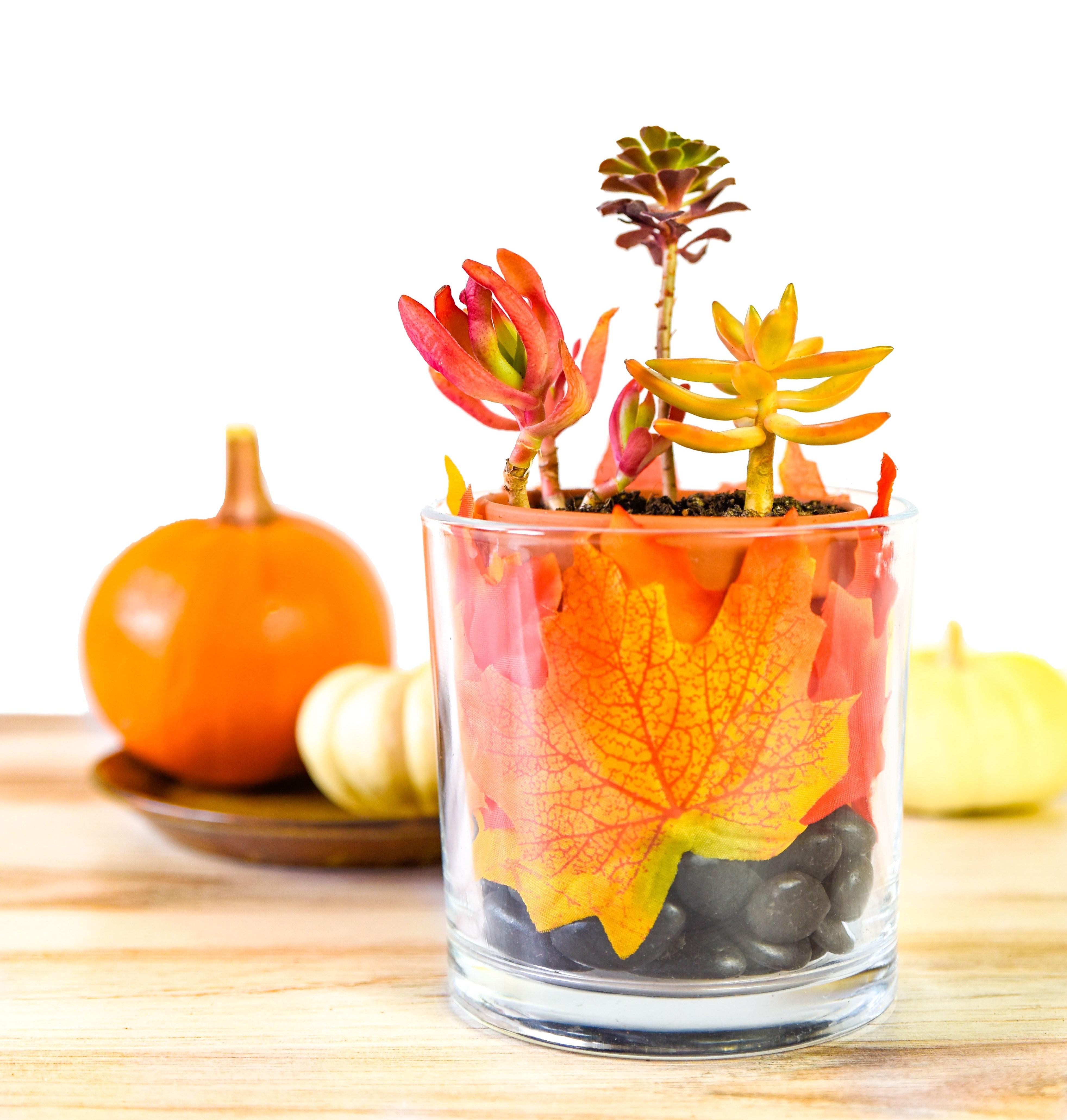 Autumn Succulent Planter DIY