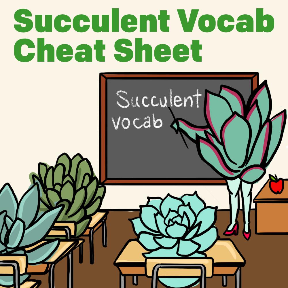 Succulent Vocab Cheat Sheet