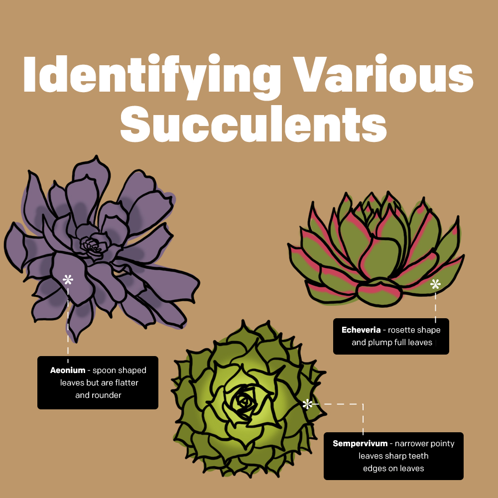 Identifying Various Succulents
