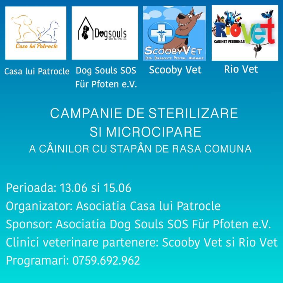 Campanie de sterilizare și microcipare a câinilor cu stăpân de rasă comună