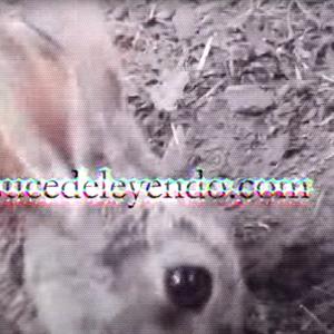 IG Video2 - Sucede Leyendo