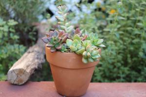 Pot o Joy - succulents - Sucs for You!