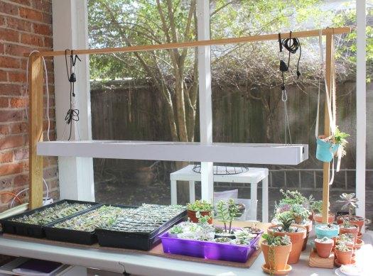 Photo: My grow light set up