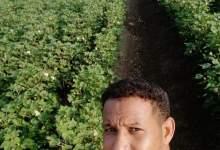 Photo of شاب سوداني طموح يحكي قصة نجاحه في الزراعة بـ«تمويل مصرفي»