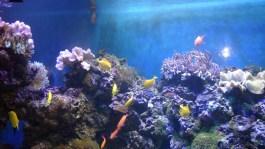 zoo-aquarium2